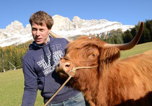 Hochlandrinderzucht vom Rosengarten - Mucche Scozzesi dal Catinaccio